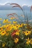 Morning landscape with flowers on Lake Geneva Stock Photos