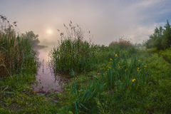 Morning landscape with fog Royalty Free Stock Photography