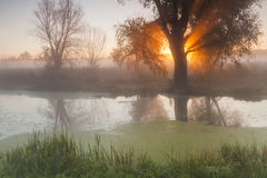 Morning landscape with fog over the river Royalty Free Stock Image