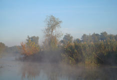 Morning landscape with fog on the river Royalty Free Stock Photo
