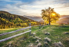 Morning landscape. In the mountains Royalty Free Stock Photo