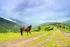 Morning landscape in the mountains. Carpathian Royalty Free Stock Photos