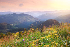 Morning Landscape in Mountains  with wild herbs Stock Images
