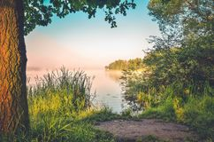 Morning landscape of nature. Lake with green plants royalty free stock images