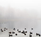 Morning landscape over foggy misty lake with duck Royalty Free Stock Photos