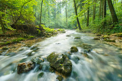 Morning landscape with river and forest. River flowing through the forest, long exposure shot Stock Image
