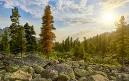 Morning landscape in Siberian mountain forest Royalty Free Stock Images