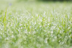 Morning landscape sunrise in the meadow, on the grass and flowers of the drops of dew.  Stock Photography
