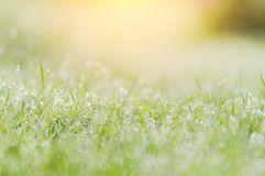 Morning landscape sunrise in the meadow, on the grass and flowers of the drops of dew.  Royalty Free Stock Images