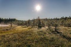 Morning landscape Royalty Free Stock Image