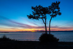 Morning landscape with tree on the shore of Lake Baikal Stock Photography