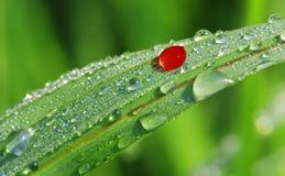 Morning leaf Royalty Free Stock Image