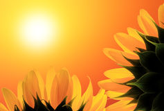 Morning of life. Two sunflower on background sunrise royalty free stock image