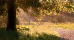 Morning light. Early morning. Park. A little fog and bright sunlight royalty free stock image