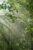 Morning light. Sunny morning in the deciduous forest,middle europe, poland, bialowieza forest Royalty Free Stock Photography