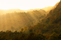 Morning. Light amidst forests and mountains Royalty Free Stock Photography