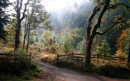 Morning Light in Autumn. Morning light and fog highlight the vivid autumn colors of this half-tamed wilderness and gate Royalty Free Stock Image