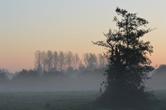Morning light Royalty Free Stock Photos