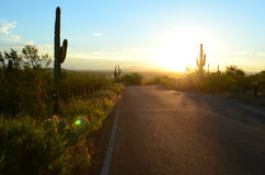 Morning light on desert road cactus landscape. Sun rises as golden light illuminates a remote desert road in the American Southwest tall saguaro and other cactus Royalty Free Stock Photography