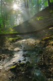 Morning light falling on the brook. With sun distance Royalty Free Stock Image