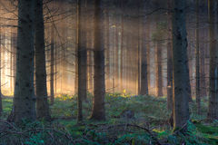 Morning light in forest Stock Images