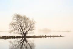 Morning light at the lake Stock Photos
