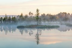 Morning light at a lake Stock Image