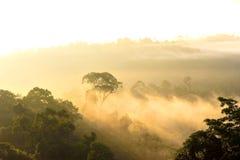 Morning light on misty forest at Hala Bala, Thailand Royalty Free Stock Image