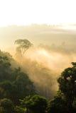 Morning light on misty forest at Hala Bala, Thailand Royalty Free Stock Photos