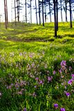 Morning light over the wildflowers Stock Photography