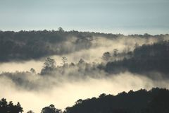 Morning light painted through the rainforest with thick fog stock photos