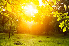 Morning light in park royalty free stock images