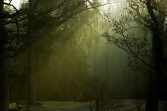 Morning light in park. Scene in the early morning in winter park Royalty Free Stock Image