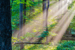 Morning Light Rays Stock Photography