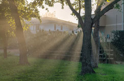 Morning light rays through tree beanches Royalty Free Stock Image