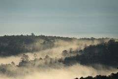 Morning light painted through the rainforest with thick fog