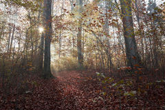 Morning light on the trail of the forest. Autumn forest with romantic road Stock Photos