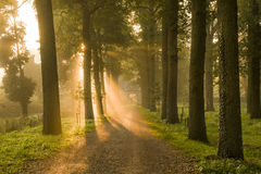 Morning light with trees. Rays of sunlight through trees in the morning over an estate entranceway Royalty Free Stock Photo