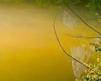 Morning Light. Warm golden sunrise Royalty Free Stock Photos