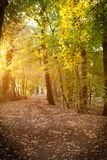 Magical Morning Light in the Woods stock image