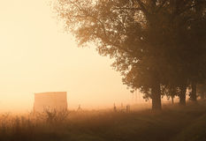 Morning lights. On foggy meadow Royalty Free Stock Photo