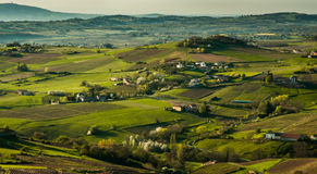 Morning lights on vineyards, Beaujolais, France Royalty Free Stock Image