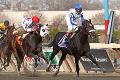 Morning Line Wins The Carter Handicap Stock Photos