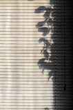 Morning louver leaves shadow plants Royalty Free Stock Image