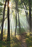Morning in forest Stock Photography