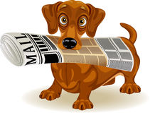 Morning mail. Vector illustration of cute dog holding the morning newspaper in his mouth