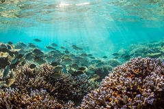 Morning Maldives underwater. Amazing Morning Maldives underwater atmosphere stock photography