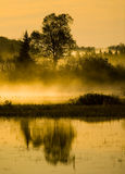 Morning Marsh, Mist, and Tree Royalty Free Stock Photography