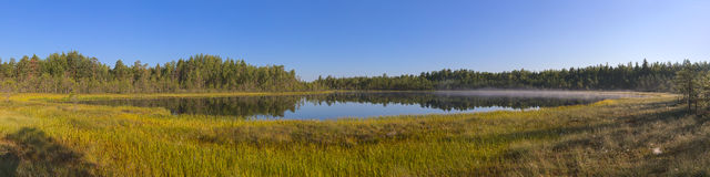 Morning in the marsh Royalty Free Stock Photo