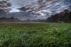 Morning meadow. Beautiful morning meadow with mist Royalty Free Stock Images